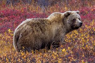 Alaska reizen - individueel en in groep, met selfdrives - Wild Alaska
